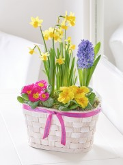Happy Birthday Spring Planted Basket