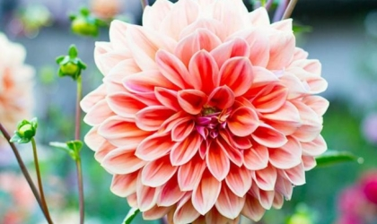 Why buy Flowers from Florists in Aberdeen
